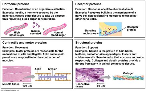 n protein function 301 moved permanently