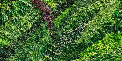 Green Wall Texture Png Google Search Vertical Greenery Plants For Garden Walls