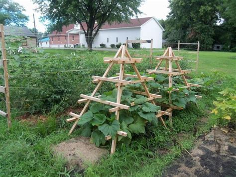 Zucchini Trellis Ideas best 25 grow squash vertically ideas only on cucumber trellis vegetable garden