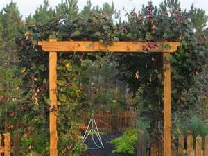 Build An Arbor Trellis by Woodwork Diy Wood Arbor Plans Pdf Download Free Build A