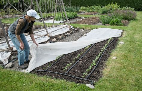 Floating Row Covers Lopez Island Kitchen Gardens Vegetable Garden Row Covers