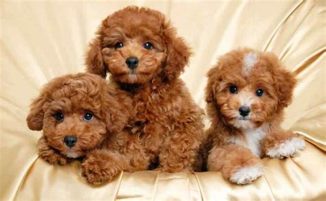 best puppies breeds breed images list types of dogs k9rl