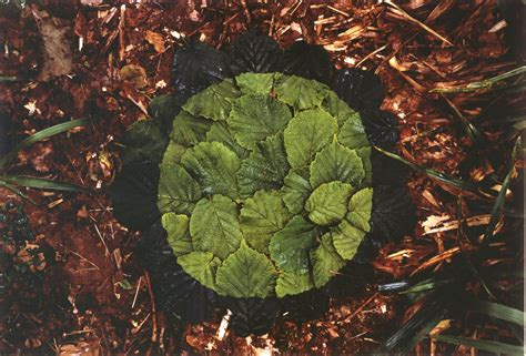Tuscan Home Interiors andy goldsworthy hazel leaves mdg interiors