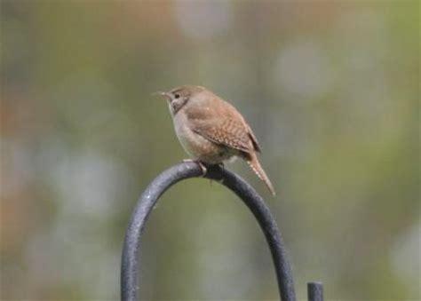 the feeder feed new bird fr z s blog