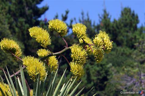 of california botanical garden botanical garden california 301 moved permanently of