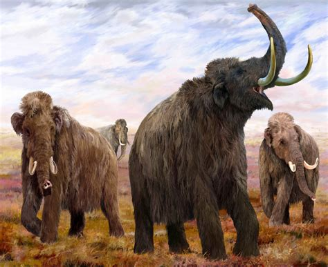 mammoth images woolly mammoth wallpapers animals library