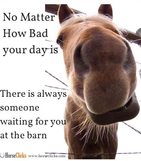 Funny Horse Memes - 222 best horses images on pinterest funny horses funny