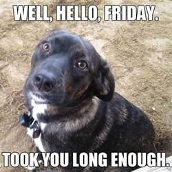Finally Friday Meme - finally friday took you long enough meme dog cute