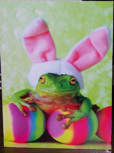 avanti frog easter card animals easter pictures