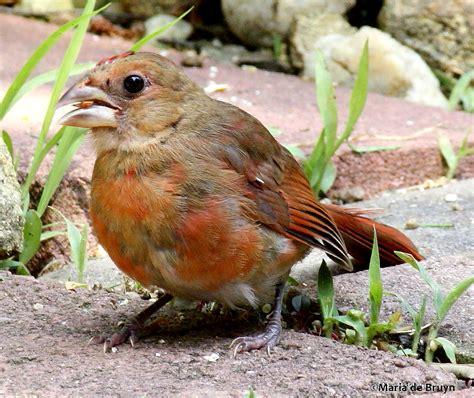 baby bird quiz my beautiful world