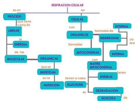 cuadro coseptual se celula biolog 237 a raquel mapa conceptual 4 respiraci 243 n celular