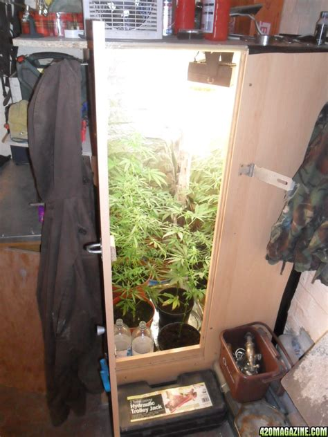 Closet Grow Room Setup by Indoor Cfl Grow Tips And Room Setup Tips