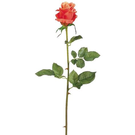 Stem Roses by 1000 Ideas About Bud On Small
