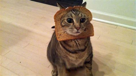 scherzi da fare in venti divertentissimi scherzi da fare al tuo gatto