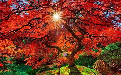 autumn  japan windows  theme themepackme