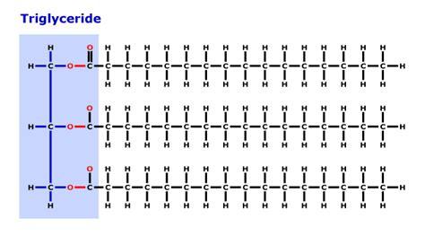 triglyceride molecule diagram image gallery triglyceride lipid