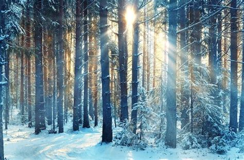 winter solstice winter solstice how to celebrate the return of light