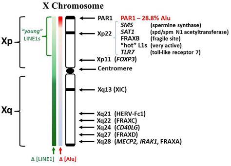 disease on y chromosome frontiers epigenetics and autoimmune diseases the x
