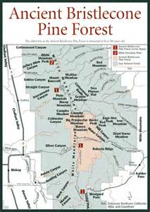 ancient bristlecone pine forest map oldest forest in
