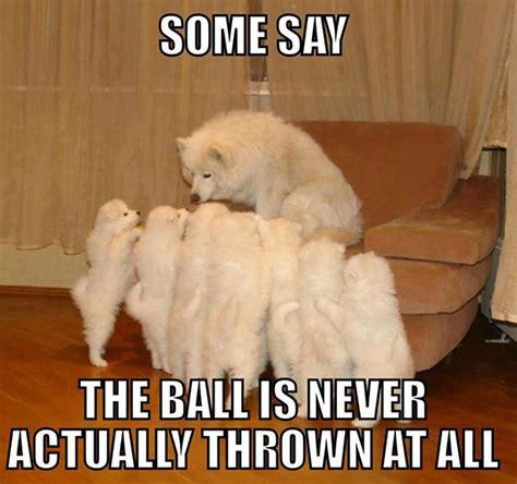 Cute Dog Memes - story telling dog meme