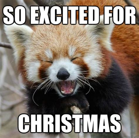 Christmas Animal Meme - 1000 images about christmas memes on pinterest funny