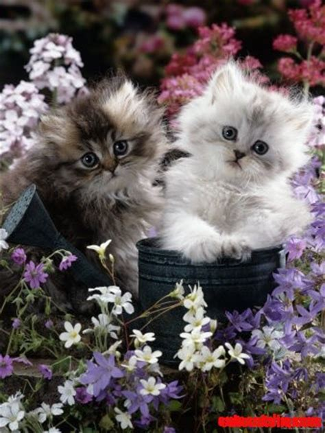 cat untuk wallpaper sweet cats cute cats hq pictures of cute cats and