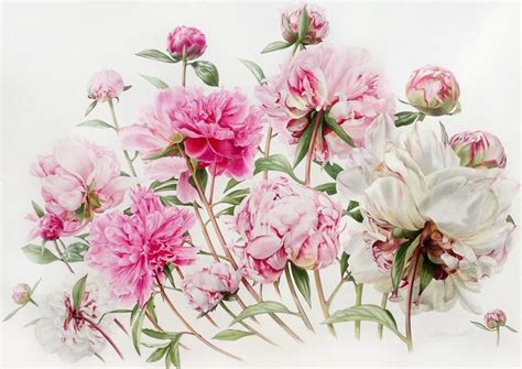 billy showells botanical painting billy showell the society of botanical artists