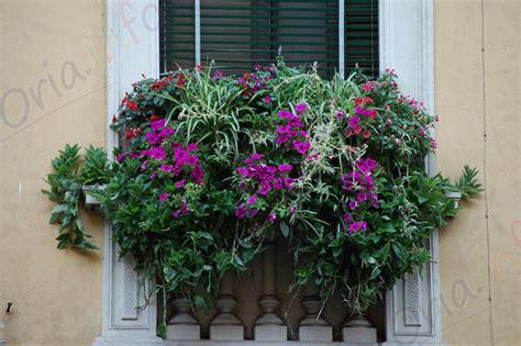 balconi fioriti in estate balconi fioriti oria in fiore oria info