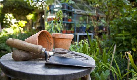 how to start an organic garden in your backyard tips and tricks how to start your own organic garden at home organicpowerfoods com