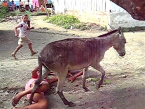 imagenes graciosos de burros el burro volador y grosero youtube