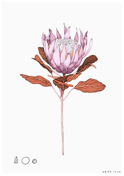 tattoo protea flower 401 best proteas images on pinterest art floral art