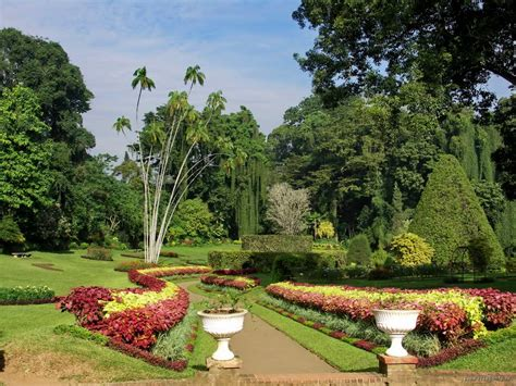 Panoramio Photo Of Sri Lanka Kandy Peradeniya Botanical Botanical Gardens Kandy