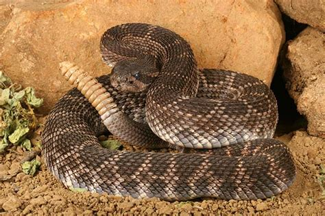 7 Most Poisonous Animals the 7 most dangerous animals in america survival