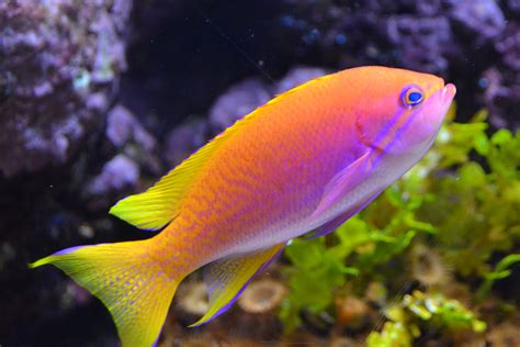 pictures of colorful fish shedd aquarium colorful fish