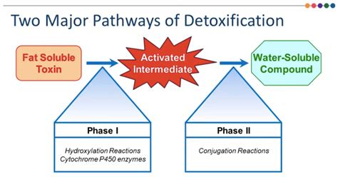 How To Detox From Vitamin B6 Overdose by Environmental Toxins What Can We Do About Them