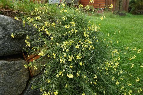 Rucola Garten Pflanzen by Rucola Selbst Anbauen Im Garten Und Am Balkon Garteln