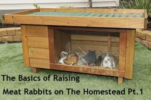 raising meat rabbits your backyard guest post by rick of rise and shine rabbitry part 1