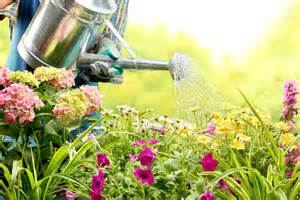 Gardening Blogs Get Out And Garden Safely