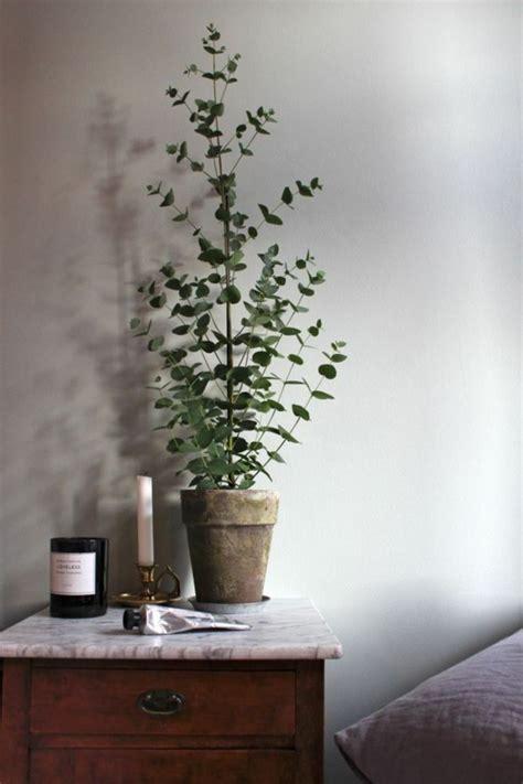Zimmerpflanzen Deko Ideen by Eukalyptus Geliebt Koalas Und Gesund F 252 R Menschen