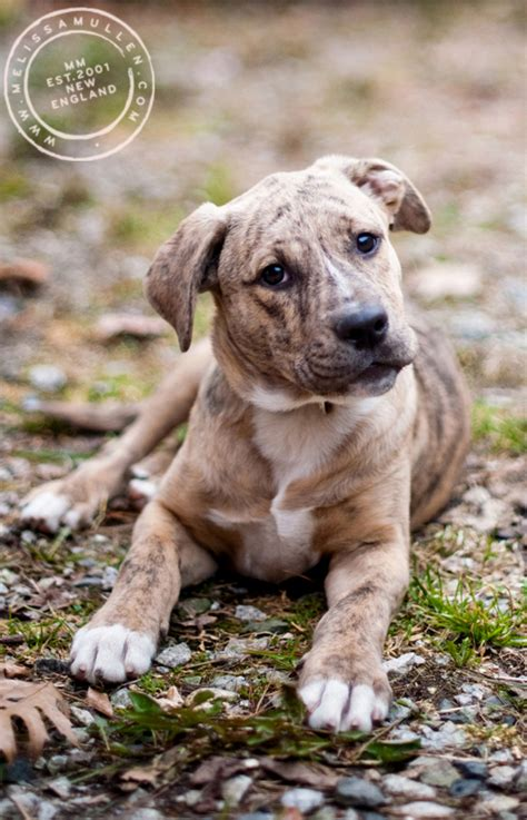 puppies for adoption in maine dogs and cats available to adopt at aws in kennebunk maine