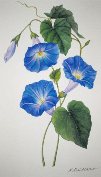 morning glory flower tattoo designs 25 best ideas about morning on