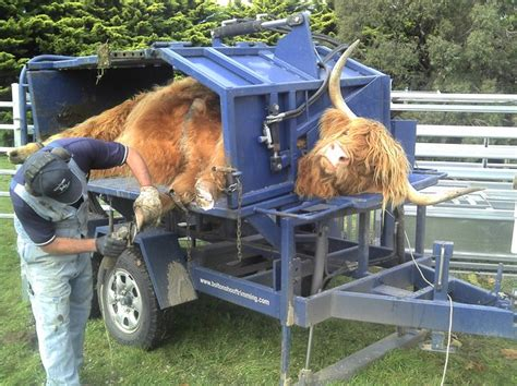 cattle hoof trimming table for sale standing for ferrier chronicle forums