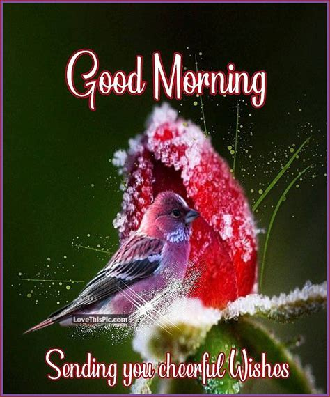 good morning sending  cheerful wishes pictures