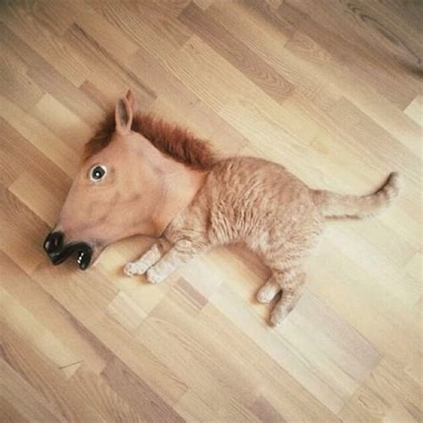 fake horse head caturday stressed out need an emergency kitten here ya