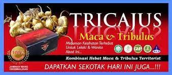 Obat Herbal Tricajus tricajus obat herbal gonorrhea klinikherbalis