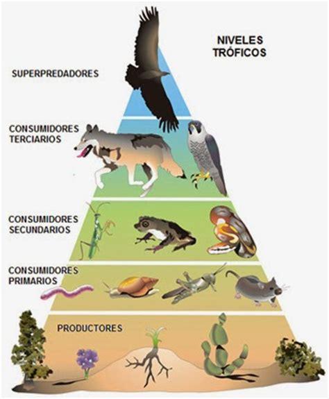 cadenas y redes troficas yahoo ecologia pir 225 mide tr 243 fica y pir 225 mide alimenticia