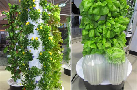 inside peek at o hare airport s vertical farm urban gardens