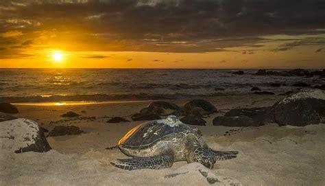 Tropical House Plans by Turtle Beach Sunset Oahu Hawaii Photograph By Jianghui Zhang