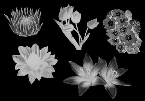 flower brush flowers brushes free photoshop brushes at brusheezy