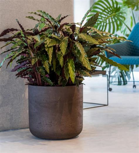 buy  chunky straight edged concrete indoor plant pot